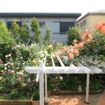 四季のお花を楽しめるお庭